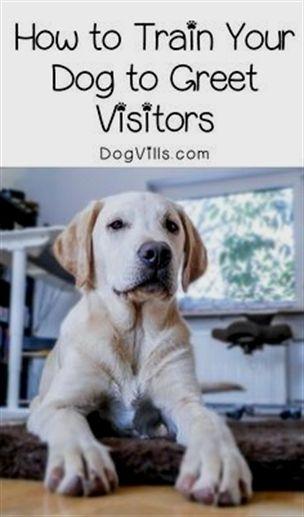 Educator E Collar Remote Dog Training Collar Dog Training