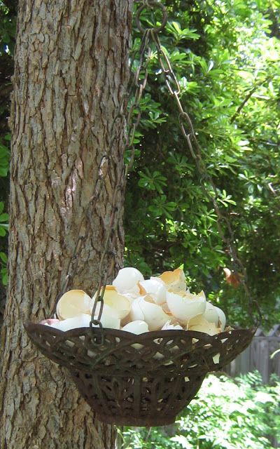 ~Eggshells for the birds~ I also crush dried eggshells and leave them scattered on the surface of my greens garden bed throughout the winter before I turn my soil for spring planting. Birds land and (Chicken Backyard Birds) Bird House Feeder, Diy Bird Feeder, Egg Shells In Garden, Bird Suet, Homemade Bird Feeders, Birds And The Bees, How To Attract Birds, Bird Food, Backyard Birds