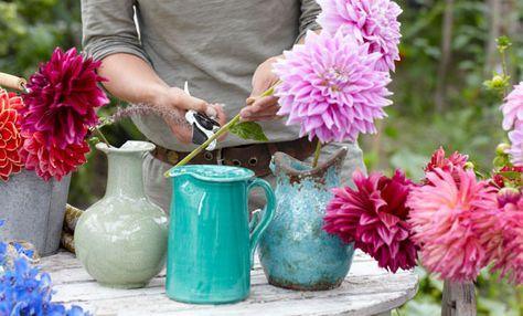 Coltivare Fiori.Come Coltivare Le Dalie I Fiori Colorati Della Primavera