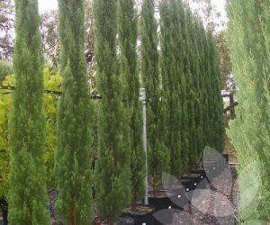 State Farm 7401 Cypress Gardens Blvd Winter Haven Fl
