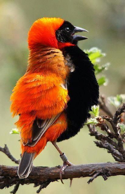 """An Orange Bishop: """"I was going to sign up for being A 'Cardinal' but The Vatican did not approve!  So A 'Bishop' I must remain..."""""""