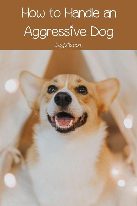 Dog Training Problems Handling An Aggressive Dog Dogs
