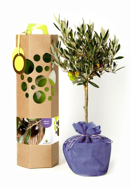Schenkeinbaumchen Olivenbaum Als Geschenk Avocadostore Geschenke Schenken Olivenbaum