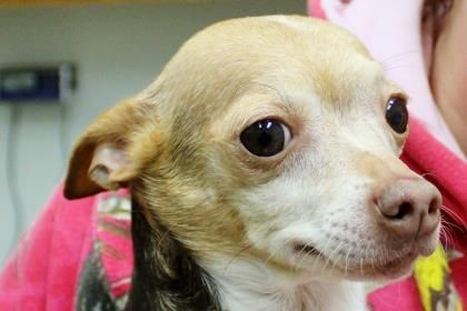 Allen County Animal Rescue Facility Rita Is An Adoptable