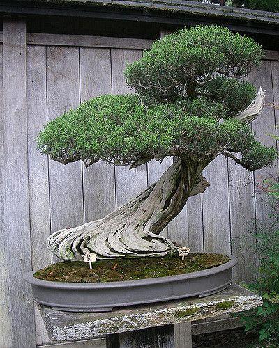 How To Start A Bonsai Tree The Diy Blog Bonsai Tree Indoor Bonsai Bonsai Tree Types
