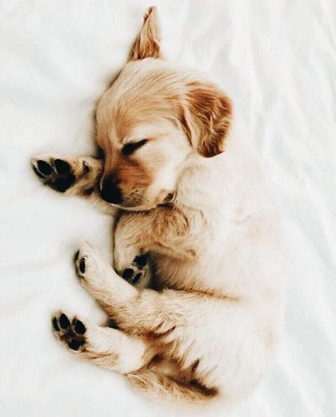 You are welcome to your website. You will find everything related to dogs and puppies.  Dogs cats puppy kitten lovers community best photo images dog food dog training dog health best dog how to teach Dog tools Clean the dog Dog Clothes Dog Recipes Treatment of small dogs cute dog