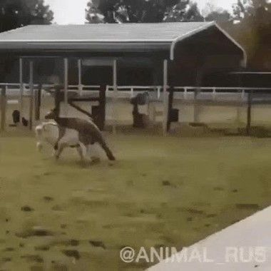 Sneaked Up And Scared His Father Animal Fails Funny Animal