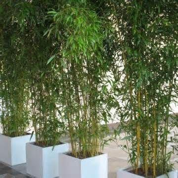 Bambus Im Kubel Yahoo Suche Bildsuchergebnisse Gardens