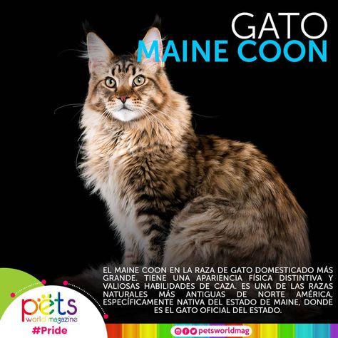 91 Ideas De Curiosidades De Las Mascotas Mascotas Hechos De Gato Perros De Compañia