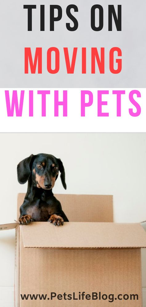 Read this post and discover helpful Tips on Moving with Pets | moving with cats ...#cats #discover #helpful #moving #pets #post #read #tips
