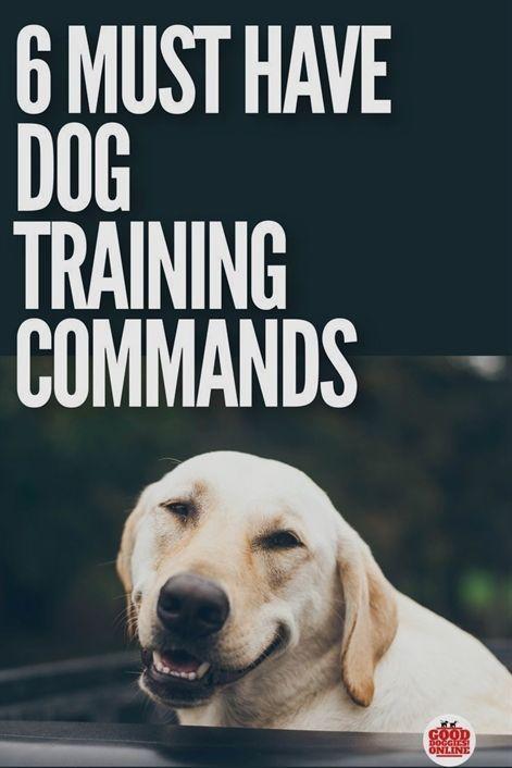Dog Training Iowa City Dog Training Wilmington Nc Petrainer 998drb Remote Dog Training In 2020 Dog Training Videos Dog Training Tips Best Dog Training