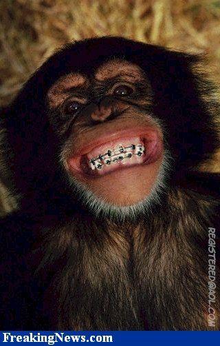 This Monkey Be Lookin Goooood!
