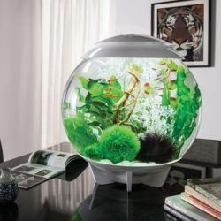 Aquarium Shop Online Aquarium Shopping Secrets Modern Fish