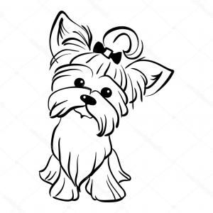 Image Result For Yorkie Images Black And White Puppy Coloring Pages Dog Coloring Page Puppy Drawing