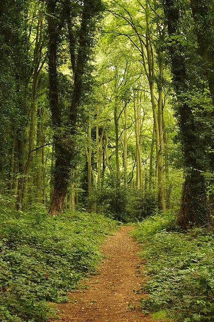 wanderthewood: Wooded path - Shrawley Wood, Worcestershire, England by James-Hetherington / Flickr — FUCKITANDMOVETOBRITAIN
