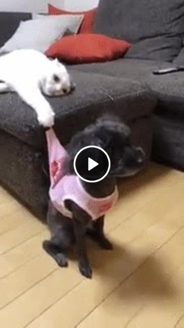 I Will Not Let You Go To The Party With Images Super Cute Dogs Cute Cats Funny Cat Videos