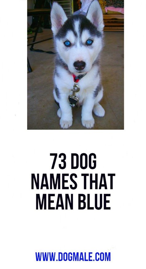 73 Dog Names That Mean Blue Dog Names Boy Dog Names Unique