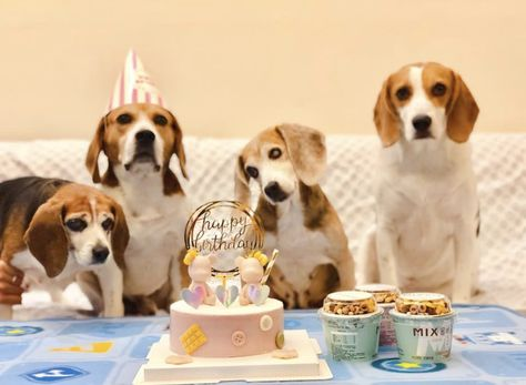 It S A Beagle Birthday Party Beagle Cute Pictures Canine