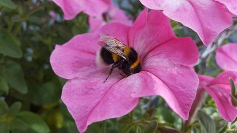 A little bees butt