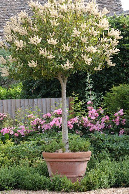 Boom In Pot Tuin.Boom In Pot Tuin Garden Planters Garden Plants