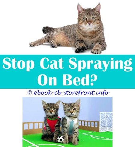 10 Sensible Clever Hacks Homemade Cat Repellent Spray For