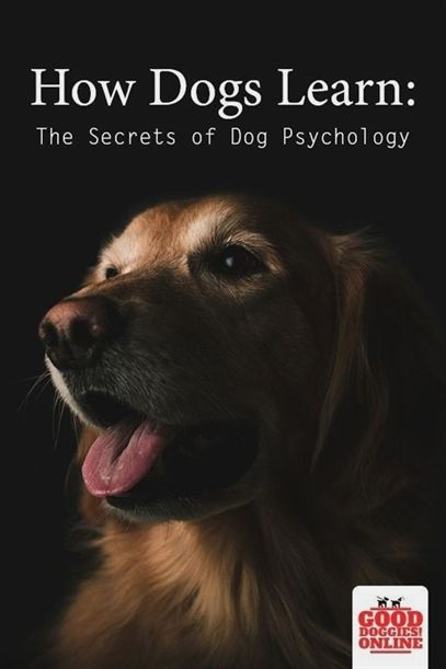 Dog Training Go To Place Dog Training No Pull Dog Training