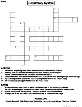 Respiratory System Worksheet Crossword Puzzle Crossword Puzzle
