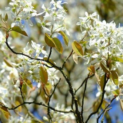 Kwitnace Krzewy Latwe W Uprawie Poznaj 15 Gatunkow I Ich Wymagania E Ogrodek Plants