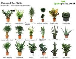 Best Office Plants No Sunlight Grow Indoors Plants That Grow With Little Sunlight Gardening Gardening Tips Indoo Best Office Plants Plants Indoor Office Plants