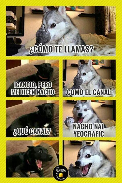 Meme Humor Fun Chistes Humor Divertido Sobre Animales Perros Graciosos Memes Divertidos