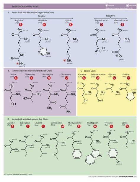 Aminoacidos Google Search Ing Química Biologia