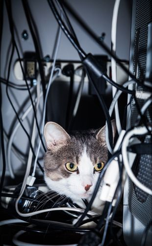 7 Quick Tips To Keep Your Cat From Chewing On Cords Cats Cats Chewing Cords Cat Care
