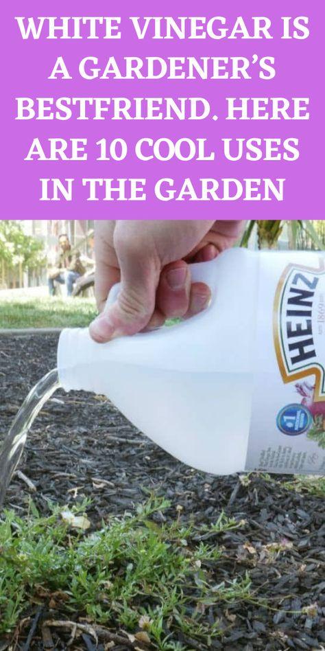Garden Cactus, Garden Soil, Garden Care, Lawn And Garden, Vegetable Garden, Raised Garden Beds, Growing Gardens, Growing Herbs, Growing Vegetables