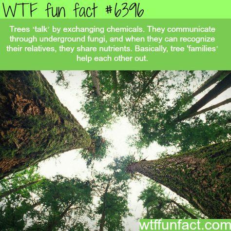 """Tree """"talk"""" - WTF fun facts"""