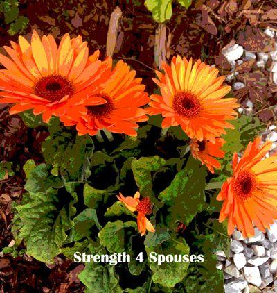 Life Lessons From Gerbera Daisies Gerbera Daisy Benefits Of Gardening Gerbera