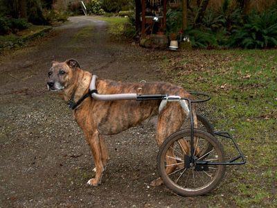 Diy Dog Wheelchair Con Imagenes Silla De Ruedas Para Perro Perro Casero Accesorios Para Perros
