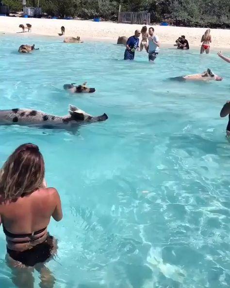 The Bahamas : island getaway