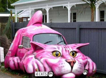 Cat car.