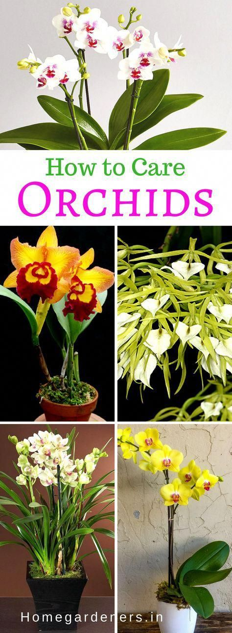 How To Grow Orchids At Home Gardening Gardeningtips Gardeningideas Flowers Indoorgarden Orchid Plants Growing Orchids Orchids
