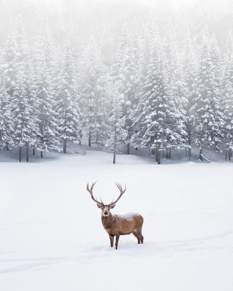 30 Things To Do In Ottawa That You Have To Add To Your Winter Bucket List Parc Omega is stunning to explore in the winter. You can keep warm inside your car as you drive pas add bucket List ottawa things winter winteranimals winterbastelnkinder winter