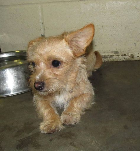 No Name Lee County Animal Services Stray Or Lost Animal Search Results Animals Dog Adoption Lee County