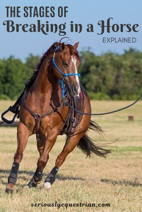 How Long does it take to break in a Horse - Seriously Equestrian Dressage, Reining Horses, Haflinger Horse, Horse Riding Quotes, Horse Riding Tips, Horse Behavior, Horse Arena, Horse Exercises, Horse Care Tips