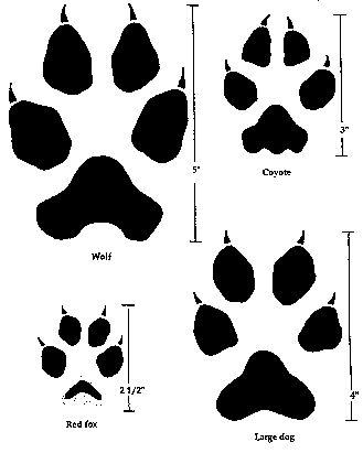 Cartoon Pattern Meat and Animal Ambesonne Fox Head Scarf Hair Wrap