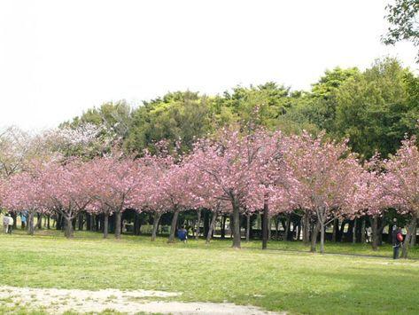 Taman Bunga Cianjur Bogor