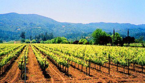 California Wine Country #napa