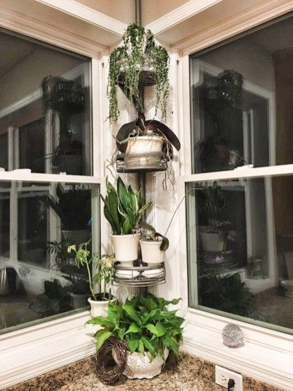 3 Things I Spotted This Week 12 Plant Holders Shower Caddy Plants