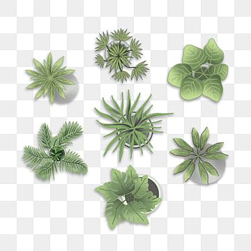 Top View Plant Plant Clipart Plantree Png Transparent Clipart Image And Psd File For Free Download In 2021 Tree Plan Photoshop Landscape Plants