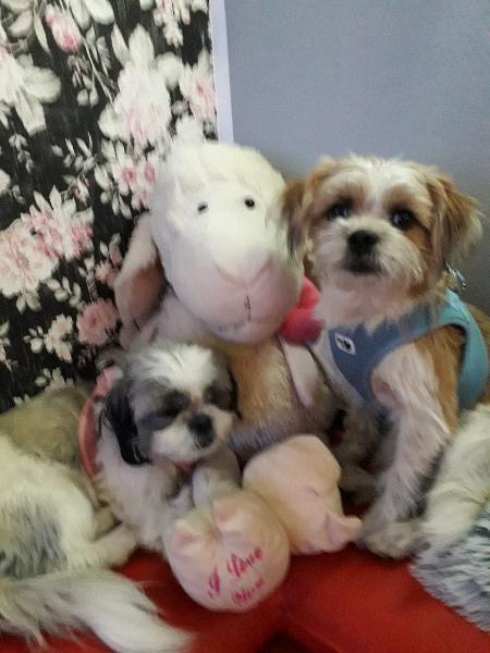 Welpen Welpen Mischlingshunde Tierheim Hunde