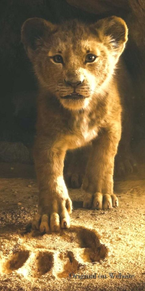 List Of Pinterest The Lion King Wallpaper Images The Lion