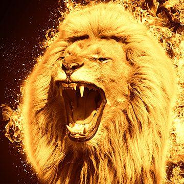 Lion Fire Background Lion King Lion King Clipart Lion Background Png Transparent Clipart Image And Psd File For Free Download Fire Lion Lion Live Wallpaper Lion Fire lion wallpaper hd download